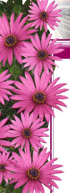 Bloem - van Santen garden plant
