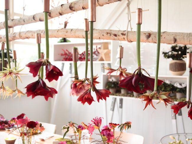 Create the perfect Christmas table with Amaryllis