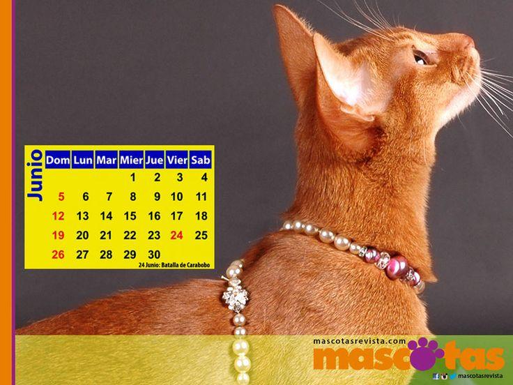Calendario de Mayo 2016 - Mascotas Revista