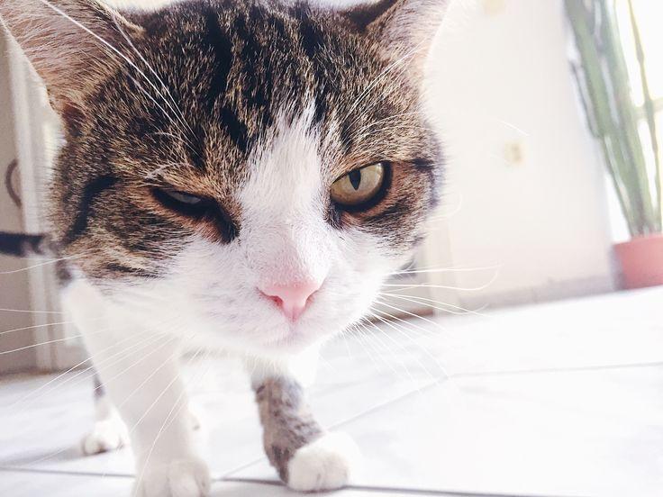 🇬🇧The results are important, but the first is the attitude, then the effort. What do you say abot that kitty cat? . 🇸🇰Výsledky sú dôležité, no najskôr nasleduje je prístup, potom snaha. Však kocúrik?