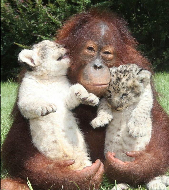 Cute Animal Friendship