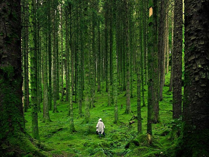 Hiker, Scottish Highlands by Luis del Río.  A solitary person walking across a forest in the Highlands, Scotland.
