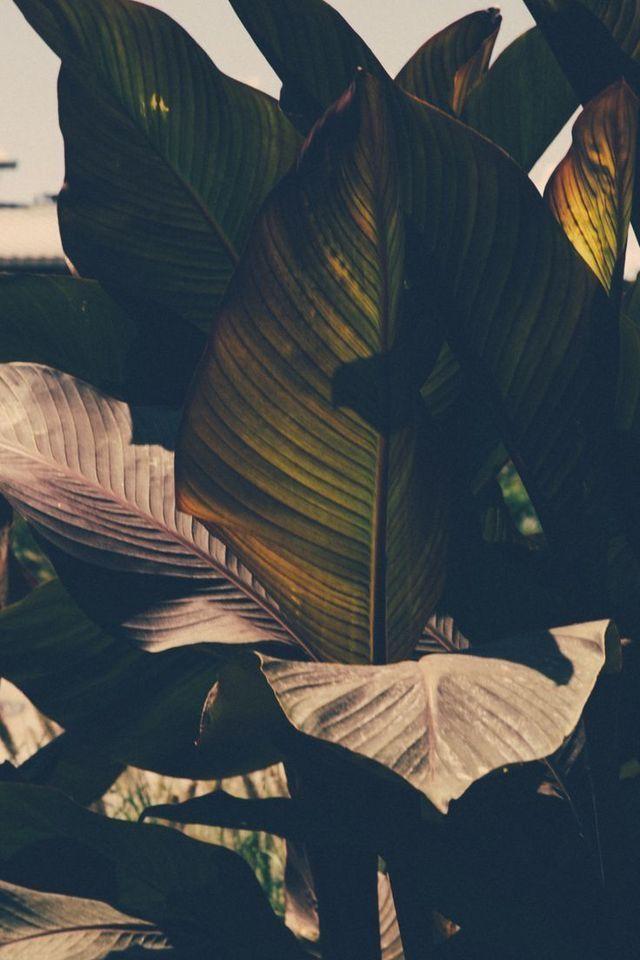 Blätter – Strukturen und Muster
