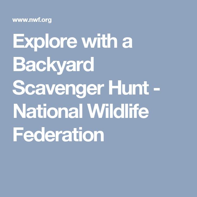 Explore with a Backyard Scavenger Hunt - National Wildlife Federation