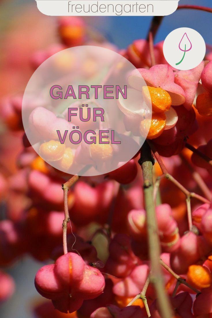 11 Straucher Fur Vogel In 2020 Mit Bildern Garten Gestalten Pflanzen Pflegeleichte Pflanzen