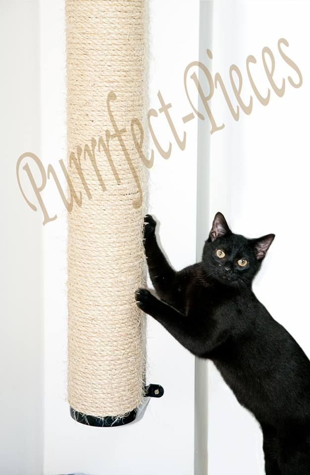 wall mountable cat scratching climbing pole