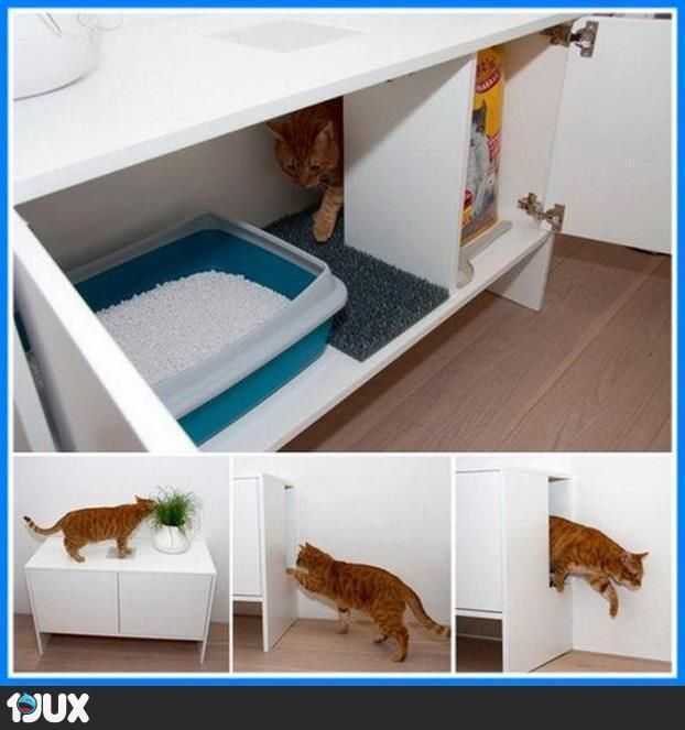 Geniales Katzenklo