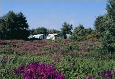 Camping pitches around the heathland