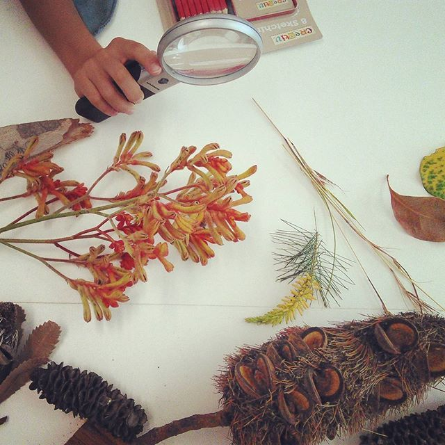 Leaves & Seeds Drawing Workshop for tweens and teens at Plant Bank, Australian Botanic Garden - Mount Annan. An array of Australian flowers and seed pods for drawing inspiration! Image via @naturescolourpalette (Instagram) botanic account of @creativeprocessworkshop. Creative Process Workshop.