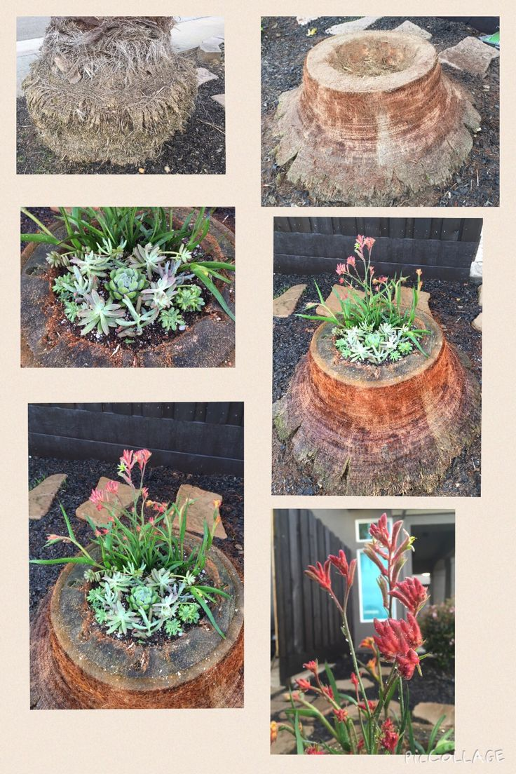 Outdoor tree stump ideas - It Started As A Dull Palm Tree Stump And Turned Into A Beautiful Succulent Creation