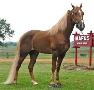 56 best little known to me horse breeds images on for Cavalli arredamenti civezzano tn