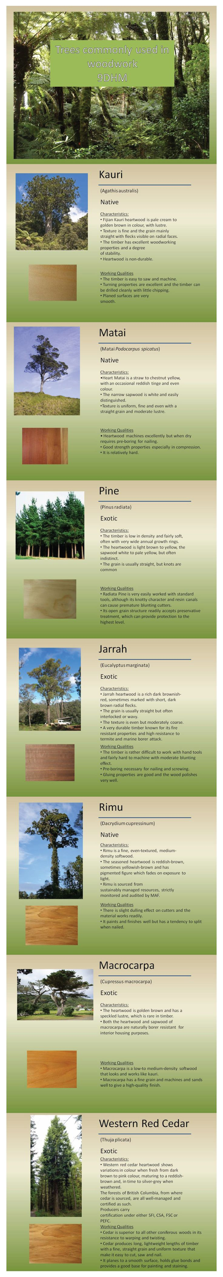 Common tree types NZ woodworking
