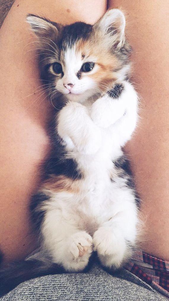 süße tiere ausmalbilder zum ausdrucken süße katze