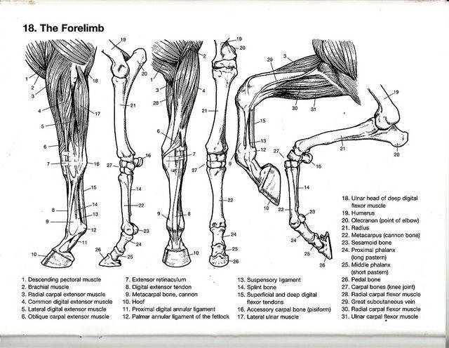 murambi the book of bones pdf