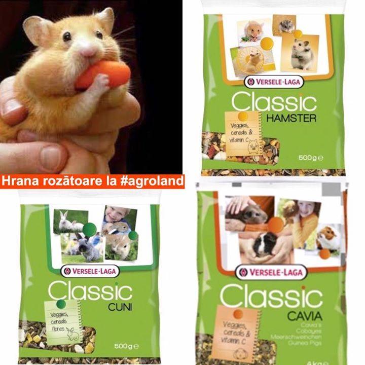 Versele-Laga (500gr) de la 35 lei Hrana pentru rozatoarele mici gasiti in magazinele Agroland precum si online aici: http://ift.tt/2xnbnKG #hamsteri #porcusori #iepuri