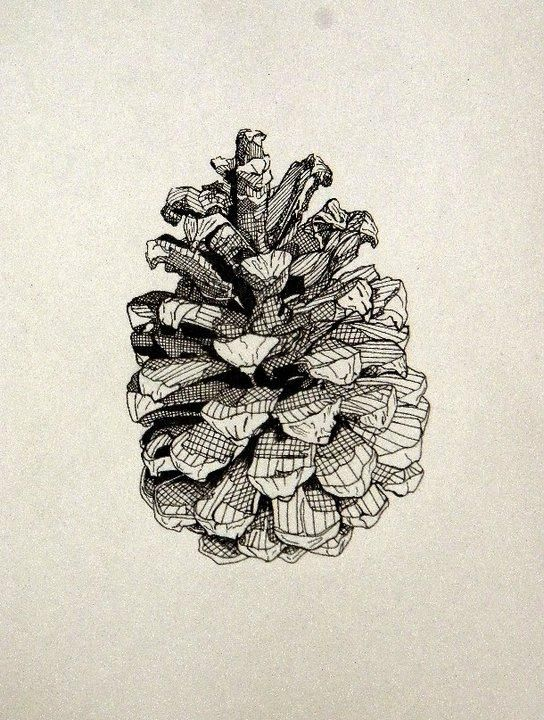First attempt to draw a pine cone in order to pass my art class. - Imgur