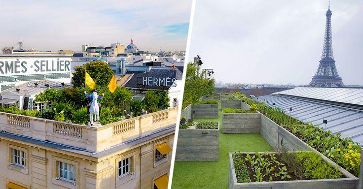 Francia pone el ejemplo con los Techos Verdes en el planeta, Francia nos vuelve a poner el ejemplo sobre el cuidado del cómo cuidar el planeta ahora con techos.