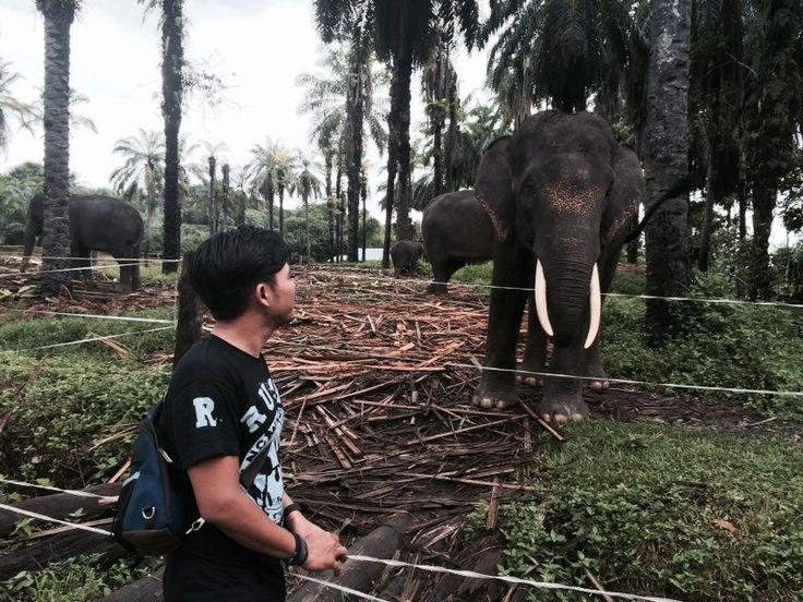 Gajah sumatera,