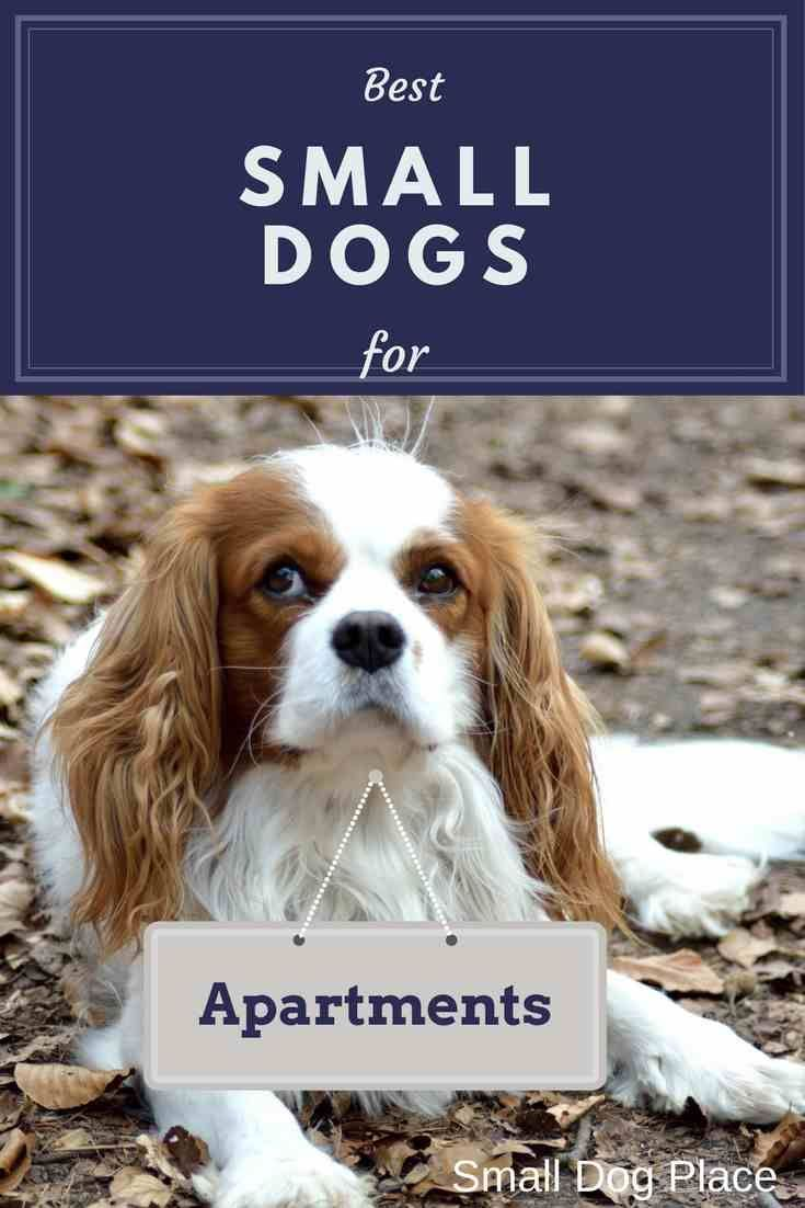Best Small Dogs For Apartments Best Small Dogs Best Apartment Dogs Apartment Dogs