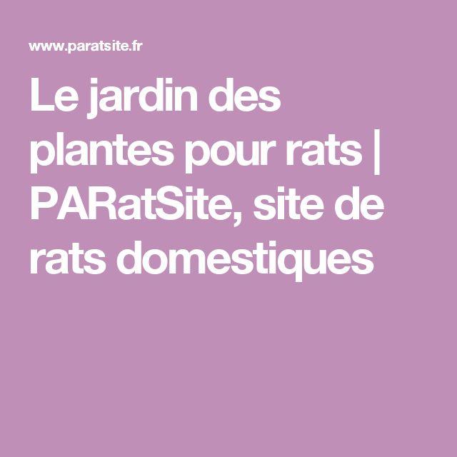 Le jardin des plantes pour rats   PARatSite, site de rats domestiques