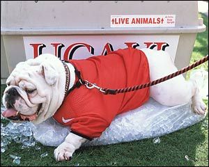 UGA ~ Check this out too ~ RollTideWarEagle.com for sports stories, scores and college football tutorial that informs and entertains. #CFB #Collegefootball #UGA
