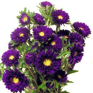Fiftyflowers Purple Matsumoto Flowers 10 Bunches For 109 99