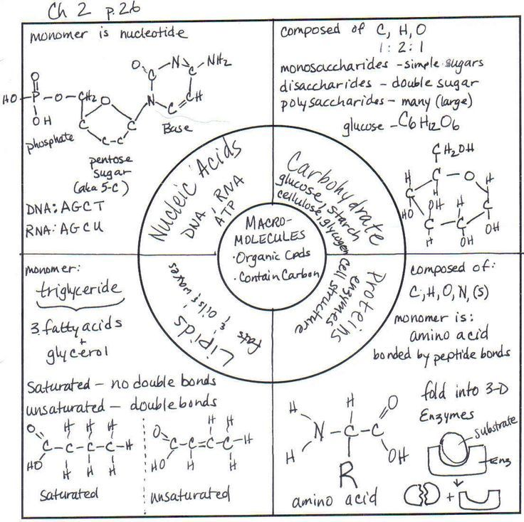 ap biology sketchnotes - Google Search
