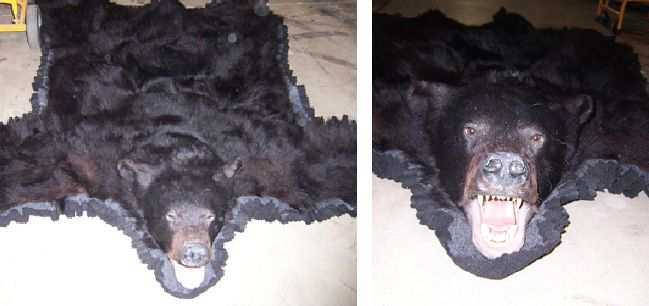 Recognize this bear rug? If you can prove this item belongs to you, please contact EPSpinterest@edmontonpolice.ca with specific details that identify the item, as well as any form of proof that it belongs to you. Only individuals providing specific information will be contacted.