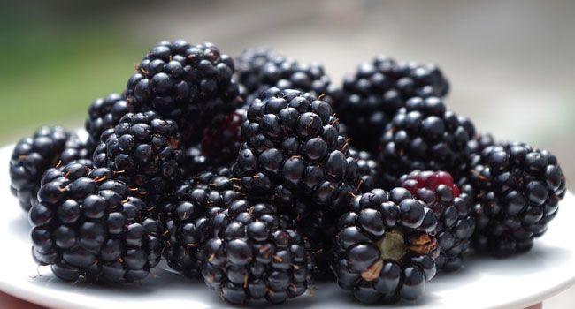 Benefits of Blackberry