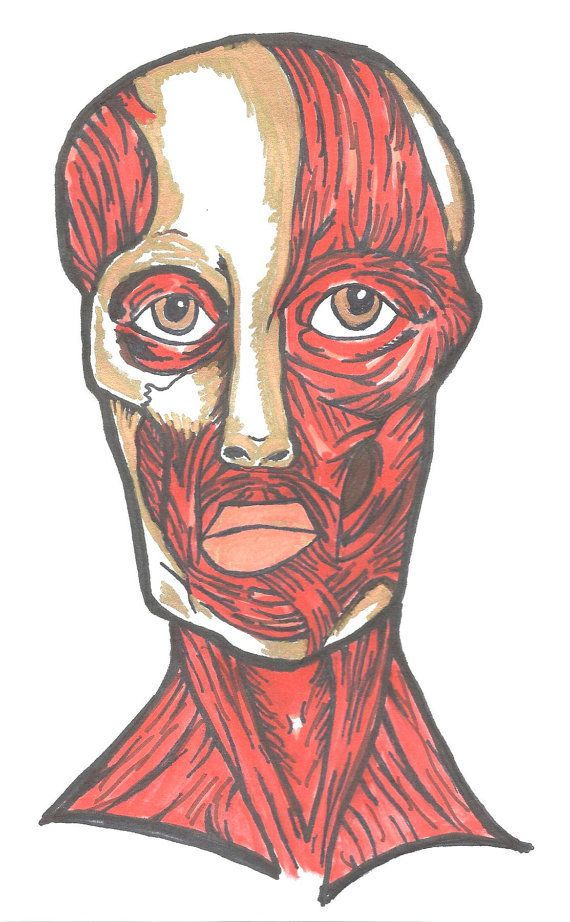 Muscle Face Anatomy Print of Original Sharpie Art by SeaMySoul