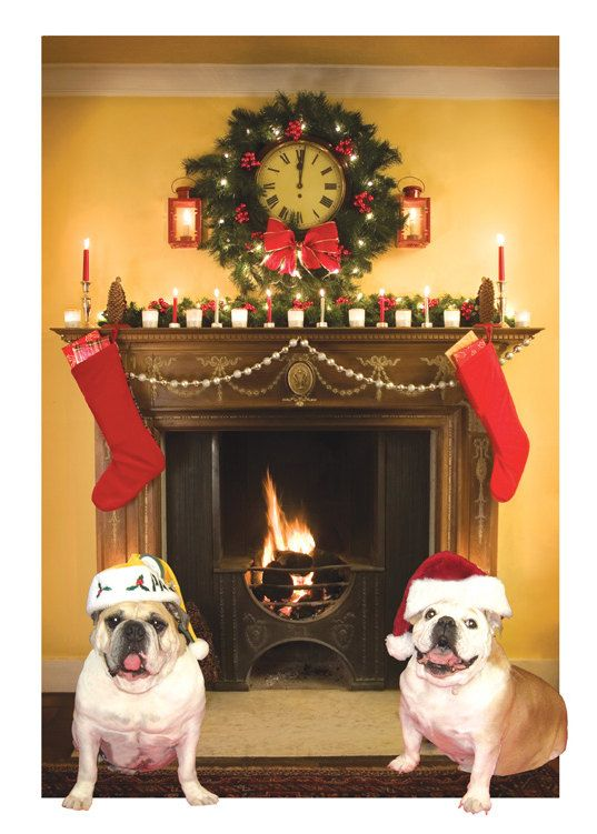 English Bulldogs Christmas Holiday Cards Merry Christmas With