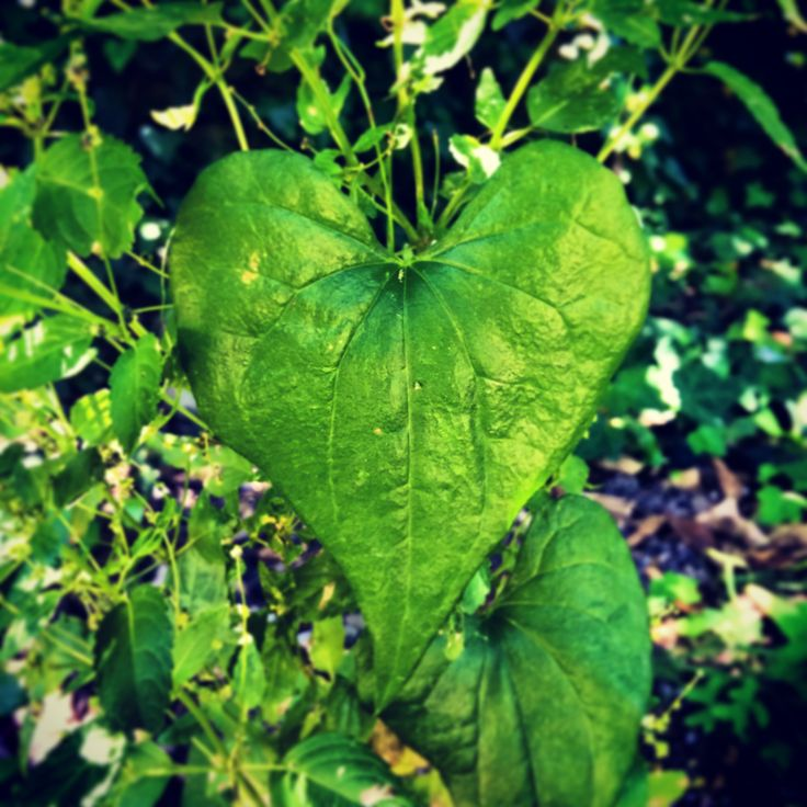 thegreenheart