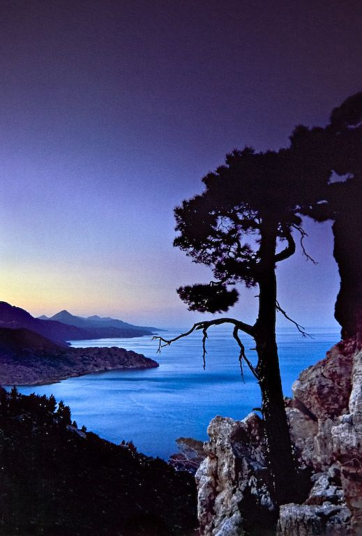 A pine tree seen at dusk, Karpathos island, Dodecanese, Greece