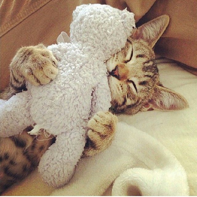 1000 ideas about cat lovers on pinterest pug rescue boxers and cats cat lovers 27 diy
