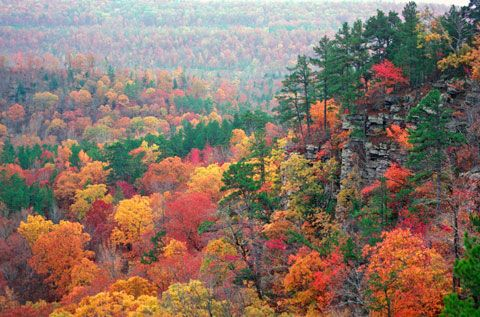 Arkansas is one of the most beautiful states in the union.  I haven't been to Alaska or Hawaii, so it is the most beautiful state I have seen in person.