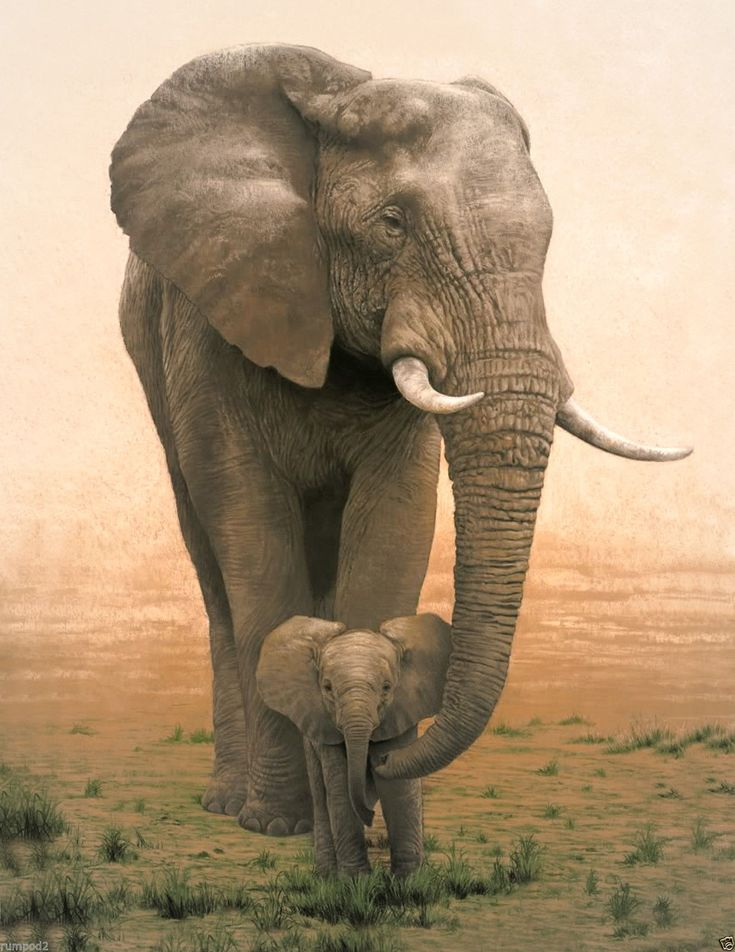 Animal Poster/Mother Elephant&Baby Illustration/Africa/Mother and Baby Elephants | eBay