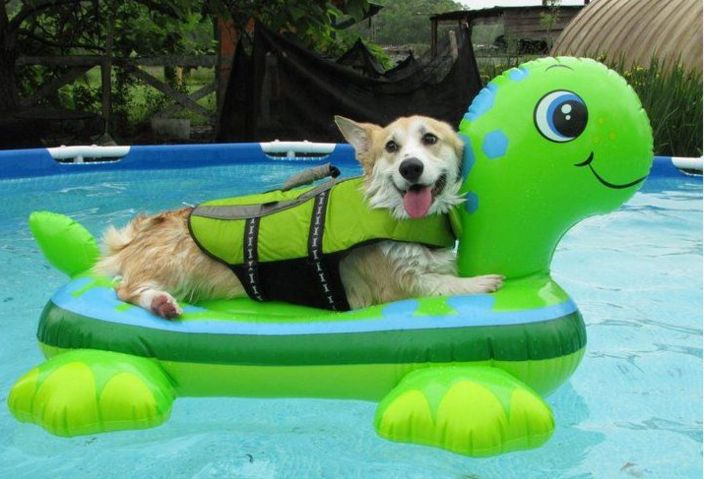 Tips, Advice, and Recipes for a Great Swimming Pool Day ...