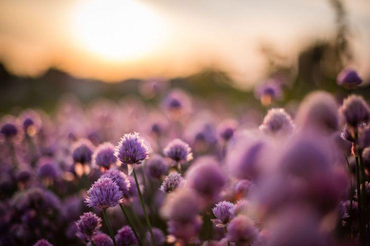 Natura - piękno samo w sobie :) #nature #natural #naturephoto #naturephotographer #naturelovers #spring #flower #tree #beautiful #sun #sunset