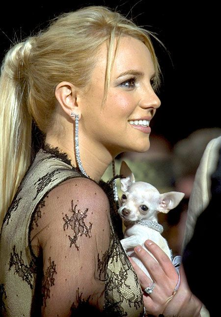 Britney Spears and her Dog Bit Bit  #BritneySpears