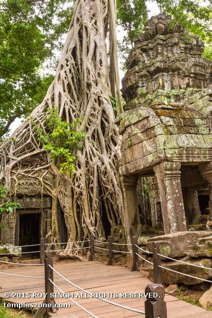 Ta Prohm monuments is cloaked in dappled shadow, its crumbling towers and walls locked in the slow muscular embrace of vast root systems. Undoubtedly the most atmospheric ruin at Angkor, Ta Prohm should be high on the hit list of every visitor.