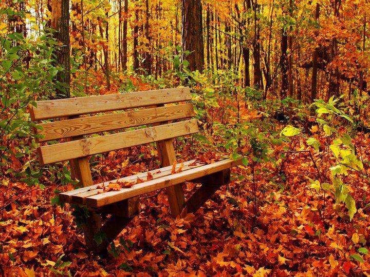 Comienza el otoño... Es la estación de las cosechas, las hojas caen de los árboles y se inicia un ciclo de renovación vital. Un buen momento para reflexionar y planificar la vida.  ¿Te vas a quedar sentad@ o vas a salir a perseguir tus sueños? Recuerda que todo es posible si crees en ello firmemente.  Feliz comienzo de semana a toda esas personas mágicas que nos acompañan por la Red cada día!