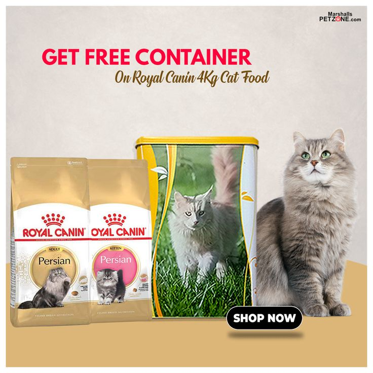 Free container with royal canin cat food dry cat food