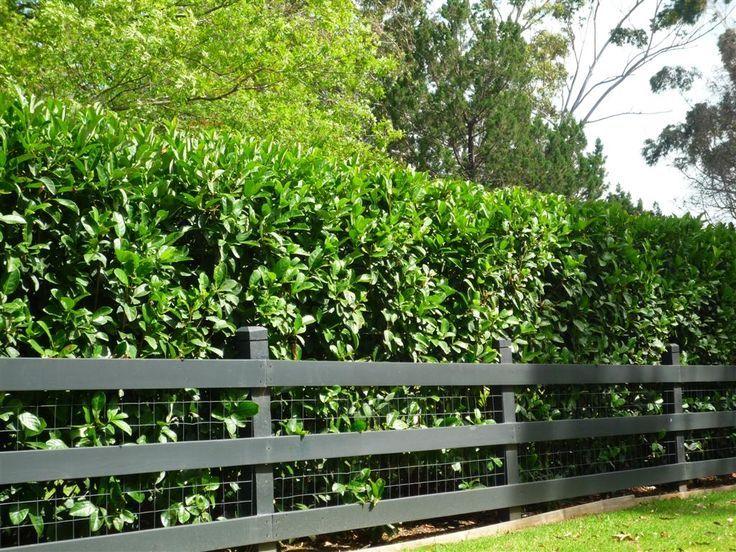 ogrodzenie ogrodowe z żywopłotu i siatki metalowej
