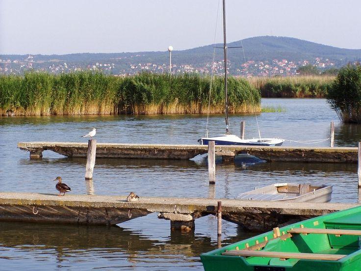 Lac de Velence | lac Velence, Hongrie