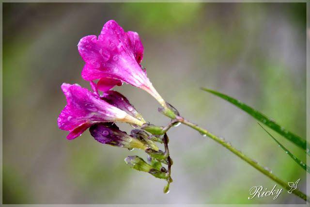 Atrapados por la imagen: Feliz Primavera