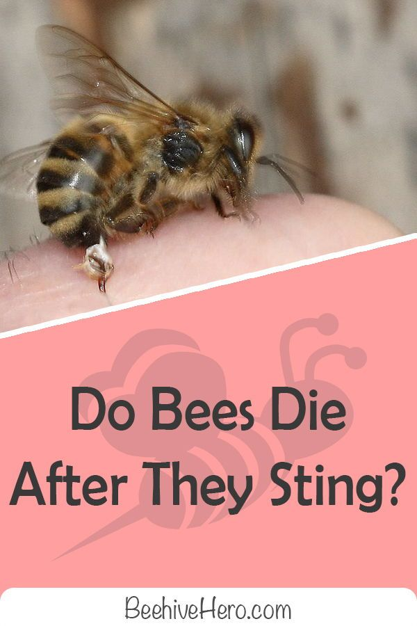 Have You Ever Wondered Why Bees Die After They Sting Us The Truth Behind This Occurrence Is Much Deeper Than It Seems C Remedies For Bee Stings Bee Bee Sting