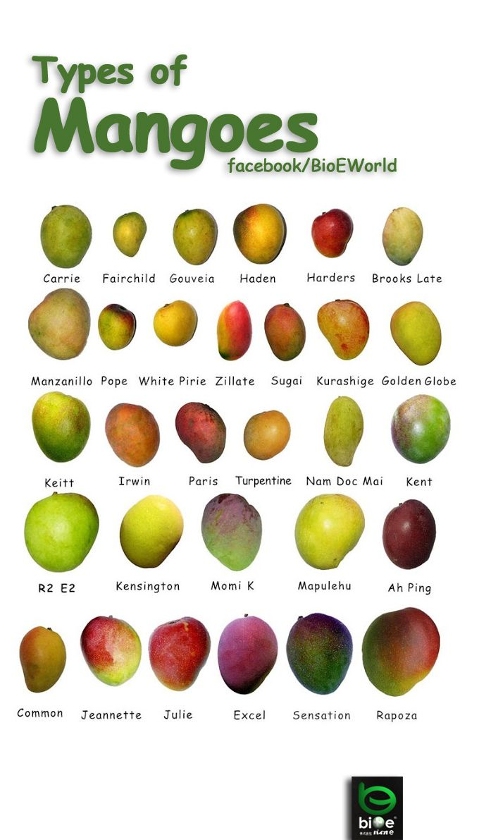 Types of Mangoes. Try them all!