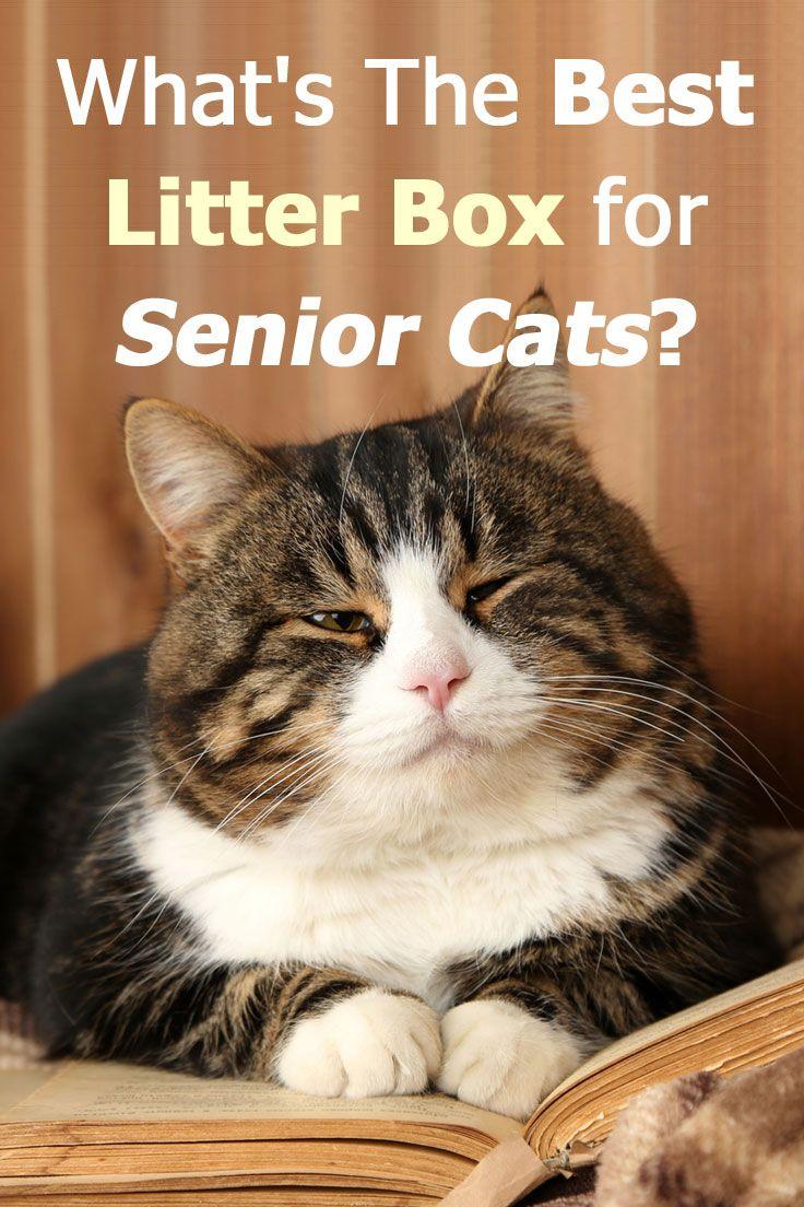 What's The Best Litter Box for Senior Cats Best litter