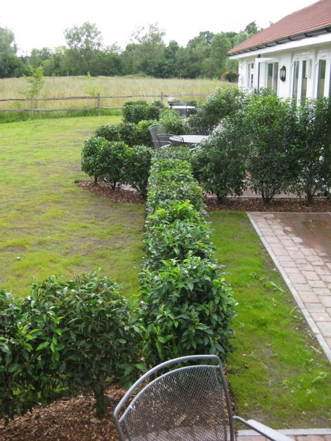 We added a Prunus lusitanica hedge which mirrors the lines at the back of the house