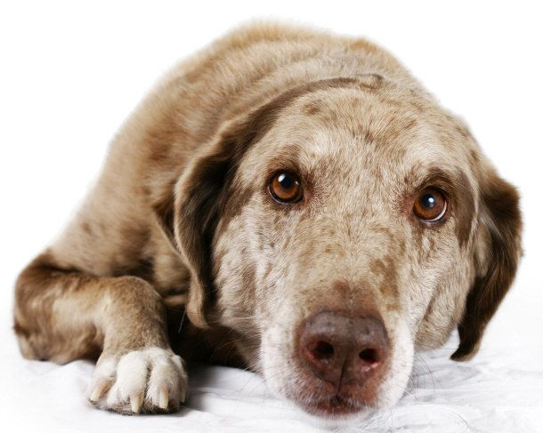 Top 15 Dog Breeds For Home Protection Dogs Dog Breeds 15 Dogs